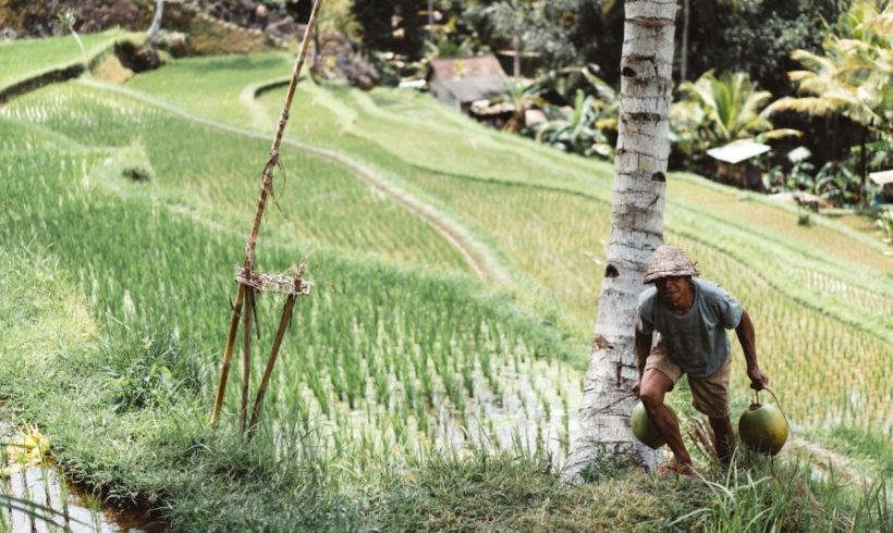Small Farmers are the Future of Global Food Security